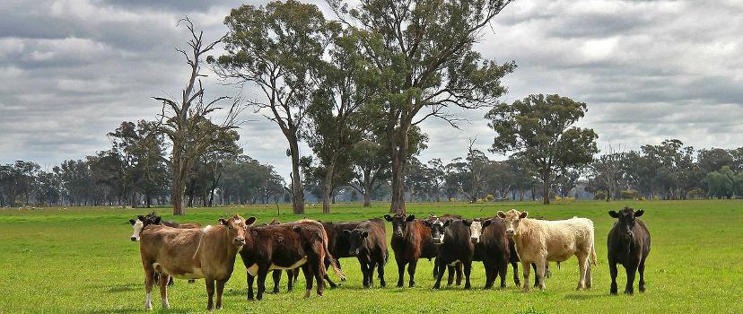 Farm australia